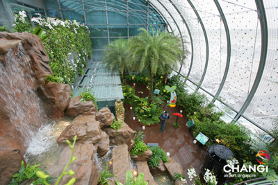 Singapore Changi Airport has a two-story green space and butterfly garden within its terminal. (Photo/Changi Airport Group)